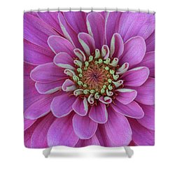 Shower Curtain featuring the photograph Pink Dahlia by Dale Kincaid