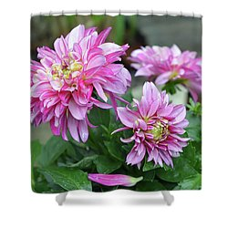 Pink Dahlia Flowers Shower Curtain