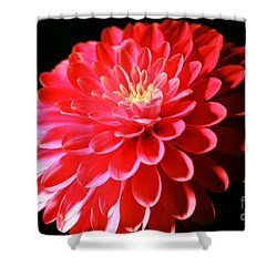 Pink Dahlia1 Shower Curtain