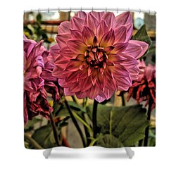 Pink Dahlias Shower Curtain
