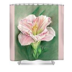 Shower Curtain featuring the pastel Pink Daylily And Green Buds by MM Anderson