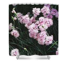 Shower Curtain featuring the photograph Pink Dianthus by Charles Robinson