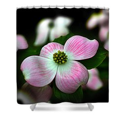 Pink Dogwood 003 Shower Curtain