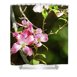 Pink Dogwood Shower Curtain