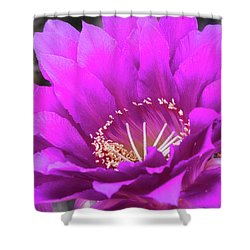 Shower Curtain featuring the photograph Pink Echinopsis Bloom  by Saija Lehtonen