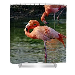 Shower Curtain featuring the photograph Pink Flamingo by Scott Carruthers