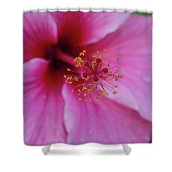 Pink Flower II Shower Curtain