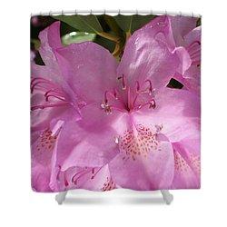 Pink Flower Shower Curtain by Yelena Tylkina