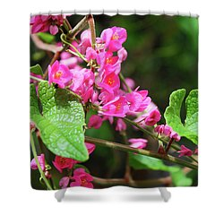 Shower Curtain featuring the photograph Pink Flowering Vine3 by Megan Dirsa-DuBois