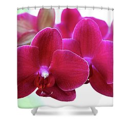 Red Orchid Shower Curtain