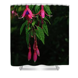 Shower Curtain featuring the photograph Pink Fushia by Tikvah's Hope