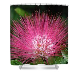 Pink Fuzziness Shower Curtain