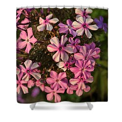 Pink Garden Phlox - Flowers Photography Shower Curtain