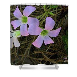 Shower Curtain featuring the photograph Pink Glow by Donna Brown