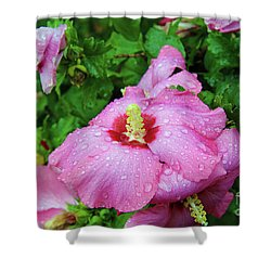 Pink Hibiscus After Rain Shower Curtain