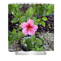 Pink Hibiscus And Wheel Shower Curtain