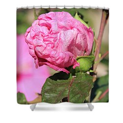 Pink Hibiscus Bud Shower Curtain
