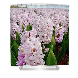 Pink Hyacinth  Shower Curtain by Mihaela Pater