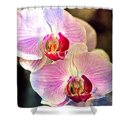Shower Curtain featuring the photograph Pink In A Row by Marty Koch