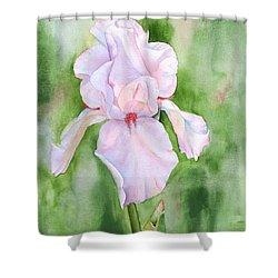 Pink Iris Shower Curtain