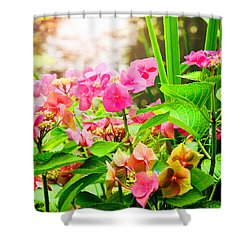 Pink Lace Cap Hydrangeas Shower Curtain