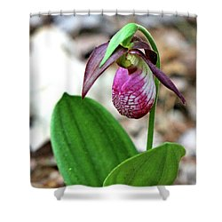 Pink Lady Slipper #1 Shower Curtain by Marle Nopardi