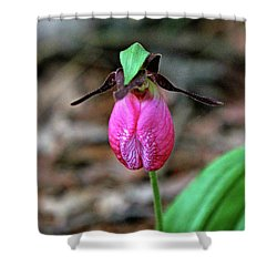 Pink Lady Slipper #2 Shower Curtain by James F Towne