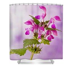Pink Lamium Macro  Shower Curtain by Sandra Foster