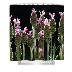 Pink Lavender Shower Curtain