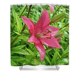 Pink Lily Flowers By Tamara Sushko  Shower Curtain