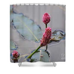 Pink Lily Pad Shower Curtain