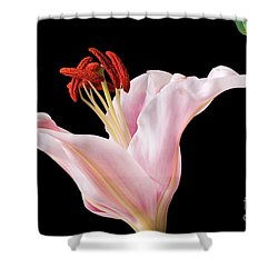 Pink Oriental Lily With Bright Red Pollen Shower Curtain