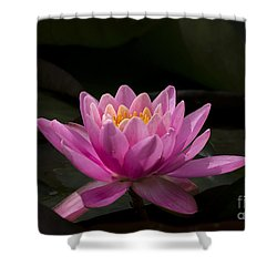 Shower Curtain featuring the photograph Pink Lotus by Andrea Silies