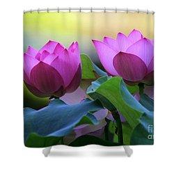 Pink Lotus Shower Curtain by Sabrina L Ryan