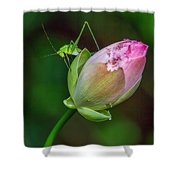 Pink  Lotus With Company Shower Curtain