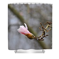 Pink Magnolias 20120321_54a Shower Curtain