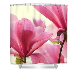 Pink Magnolias Shower Curtain by Peggy Collins
