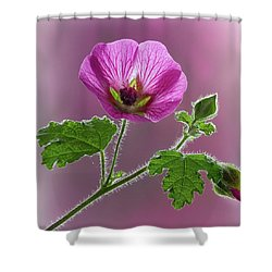 Pink Mallow Flower Shower Curtain