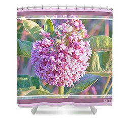 Pink Milkweed With Border Shower Curtain