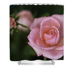 Pink Miniature Roses 3 Shower Curtain