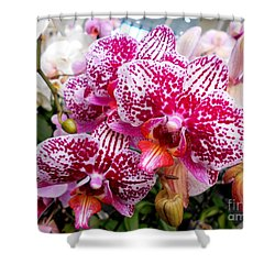 Pink Moth Orchids Shower Curtain