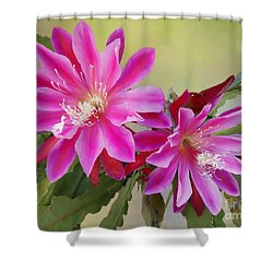Pink Epiphyllum Lily Shower Curtain