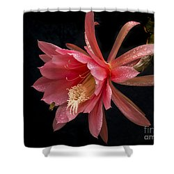 Pink Orchid Cactus Flower Shower Curtain by Inge Riis McDonald