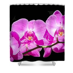 Pink Orchid Flora Shower Curtain by Bruce Pritchett
