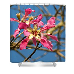 Pink Orchid Tree Shower Curtain