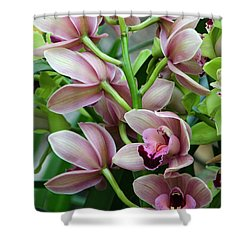 Pink Orchids 2 Shower Curtain by Ann Bridges