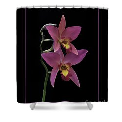 Shower Curtain featuring the photograph Pink Orchids by Darleen Stry