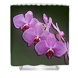 Shower Curtain featuring the photograph Pink Orchids by John Haldane