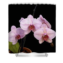 Pink Orchids Shower Curtain by Kurt Van Wagner
