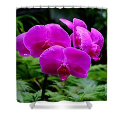 Pink Orchids Shower Curtain by Mini Arora